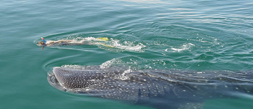 Holbox Whale Shark Tour by Airplane from Cancun Riviera Maya  | Cancun Airplane Tours